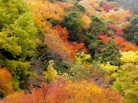 滞在の最後に訪れた赤目の紅葉